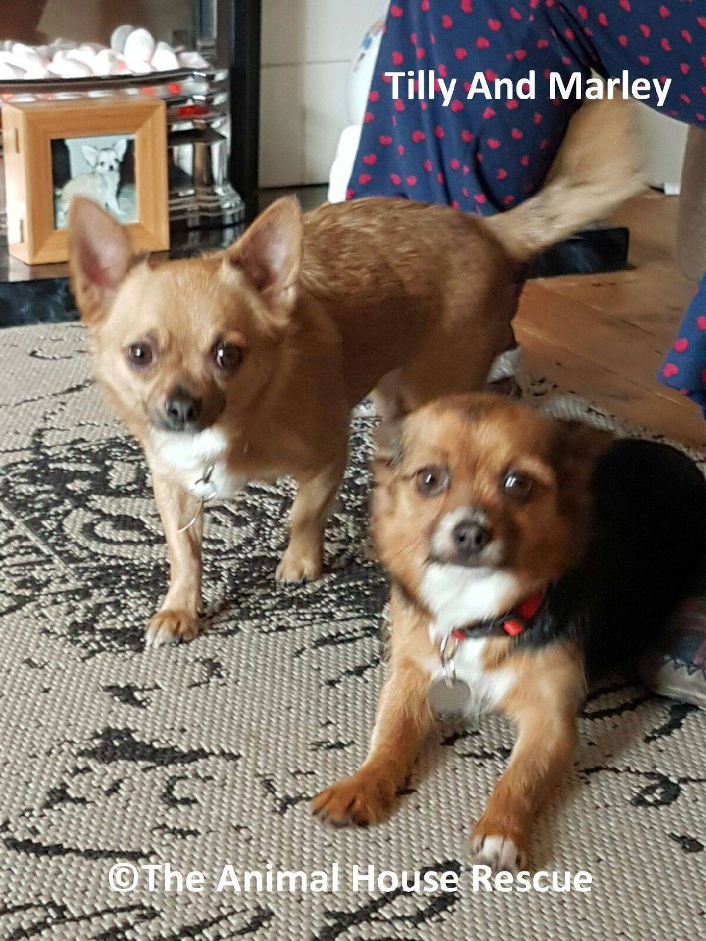 The Animal House Rescue - Dogs For Adoption